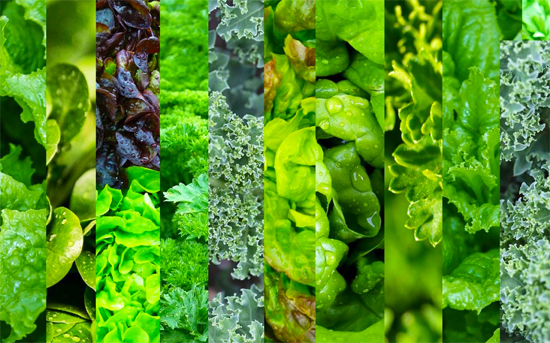 Leafy Greens - Weight Loss Friendly Foods