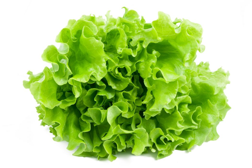 Eat Lettuce to Lose Weight