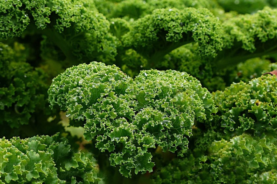 Kale - 15 Healthy Foods That Make You Feel Fuller for Longer