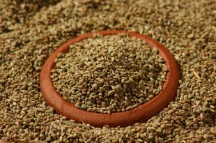 Ajwain for Weight Loss