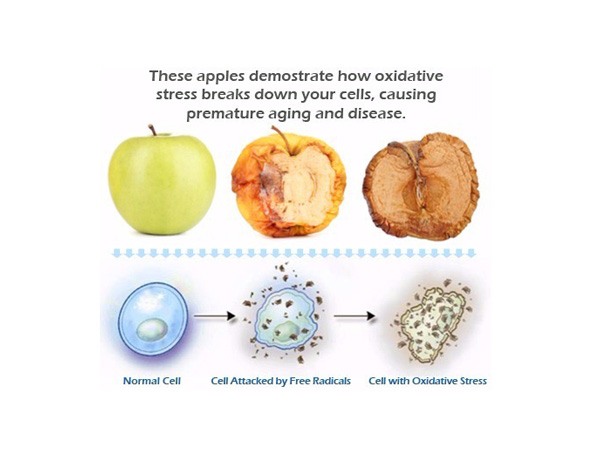 Oxidative Stress - 12 Reasons Why Sugar Is Bad and You Should Avoid It at Any Cost
